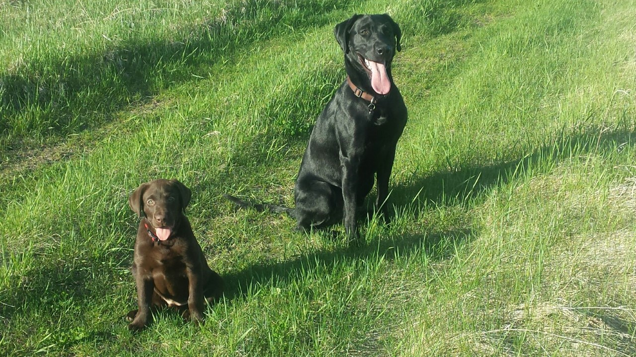 Chester and his brother Remi (Lillie & Code's son)