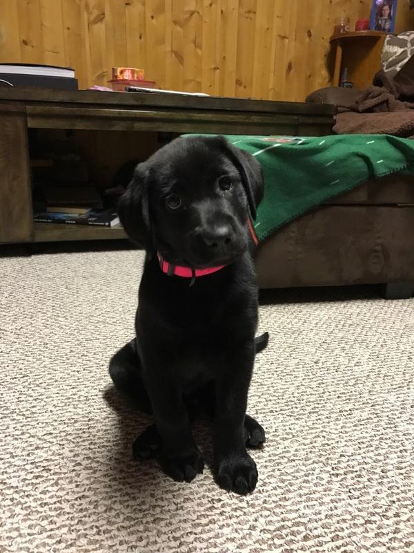 Dakota at her new home (Pink Collar Black Female)