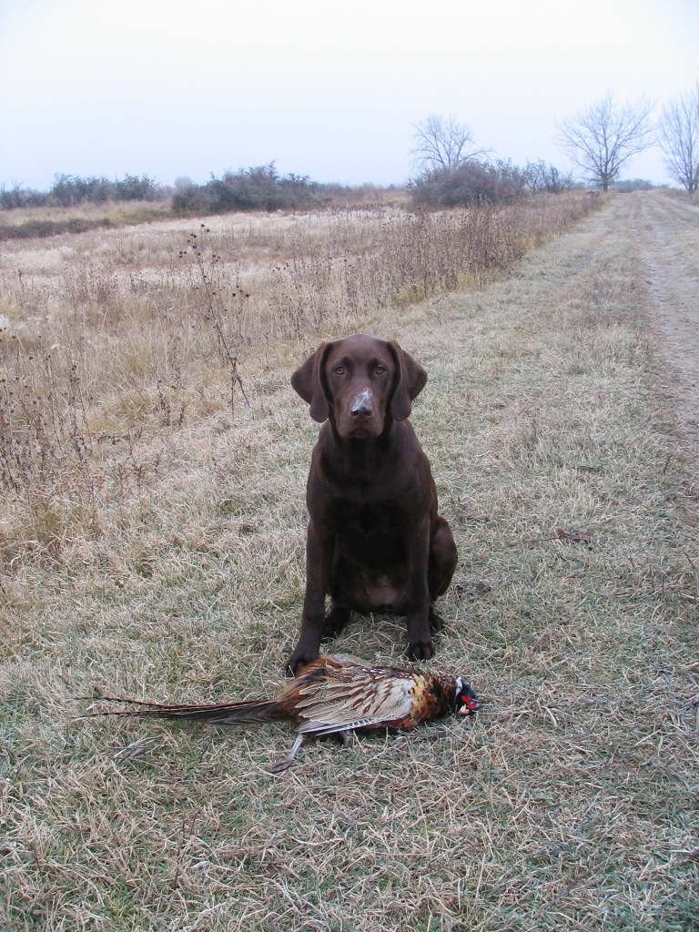 Cabela with her first bird!