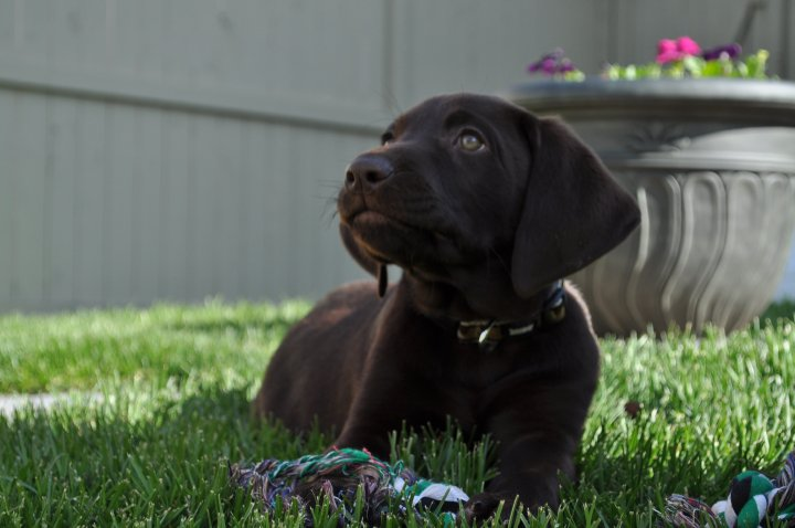 Lennox at his new home