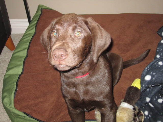 Oakley at his new home