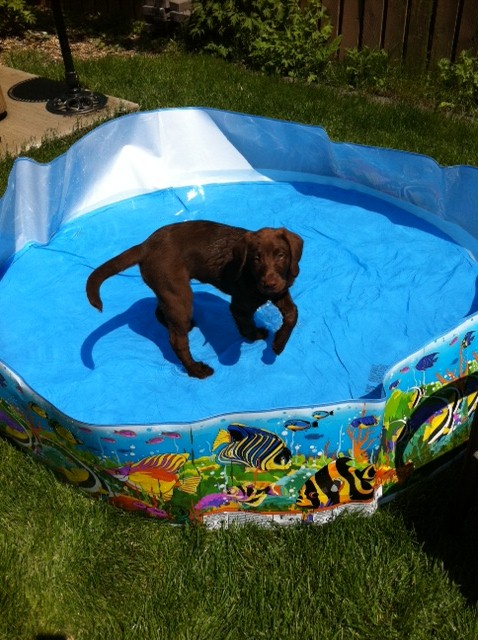 Meissa in her new pool