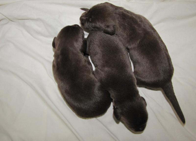 2 Weeks Old - Males