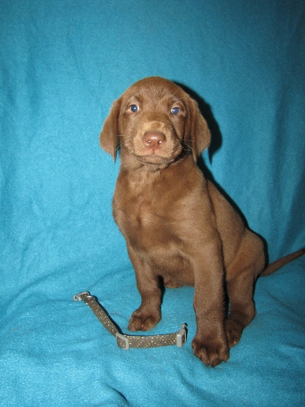 "7 Weeks Old - Green Spots Collar Female ""Beatrix"""