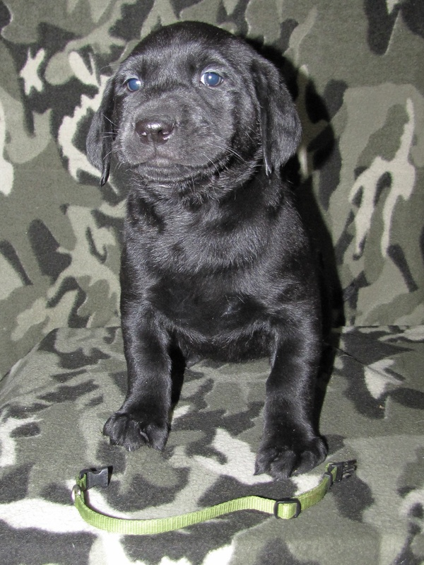 "6 Weeks Old - Green Collar Female ""Trixie"""