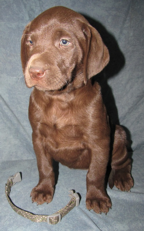 """6 Weeks Old - Green Spots Collar Female """"Sia"""""""