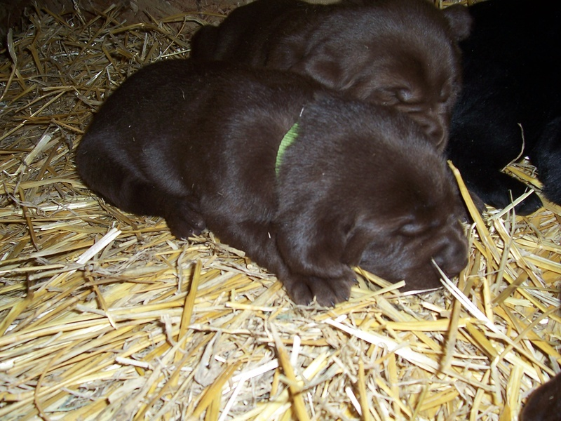 Green Collar Girl - 3 Weeks Old