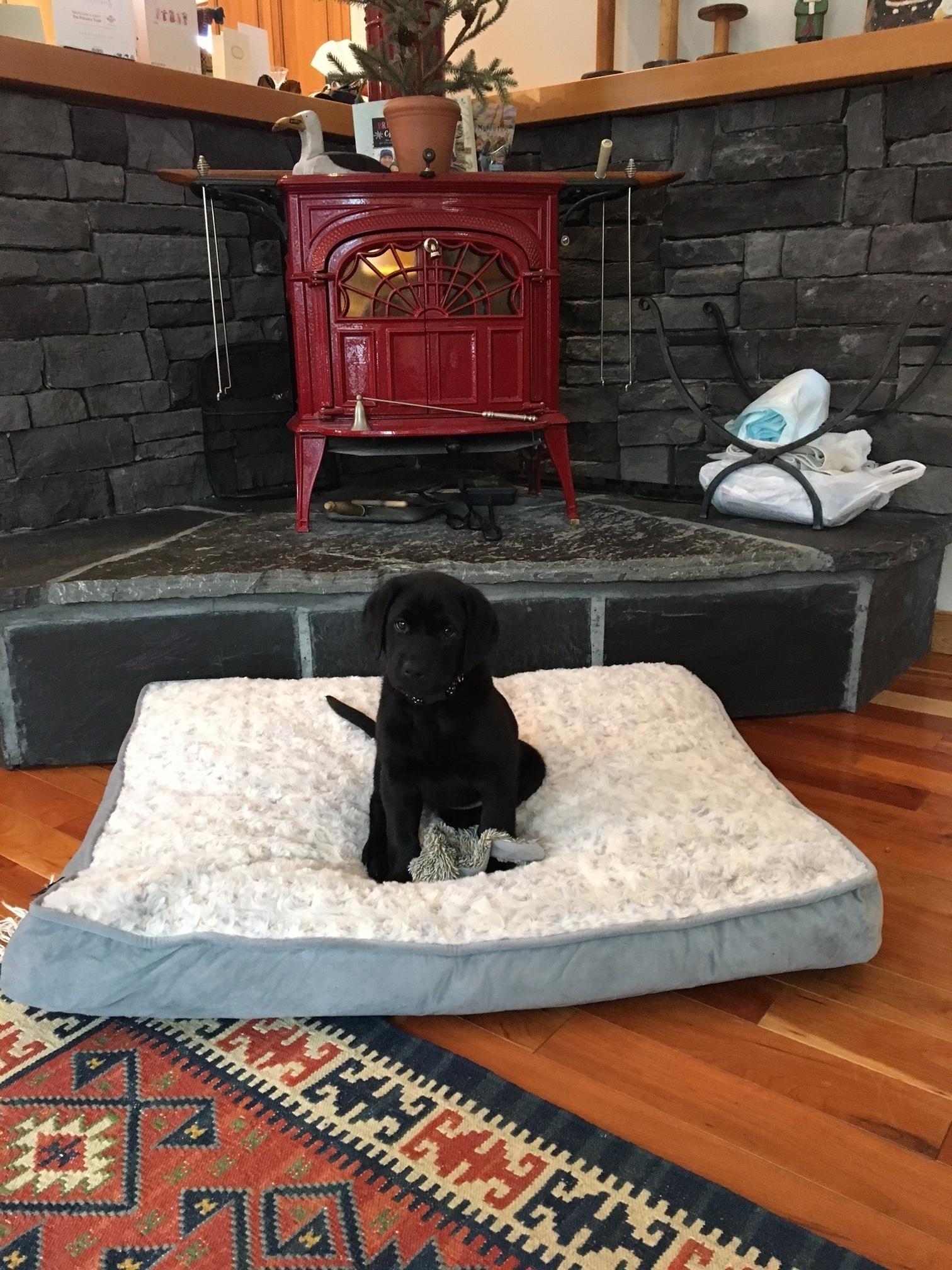 Lola at her new home (Orange Collar Black Female)