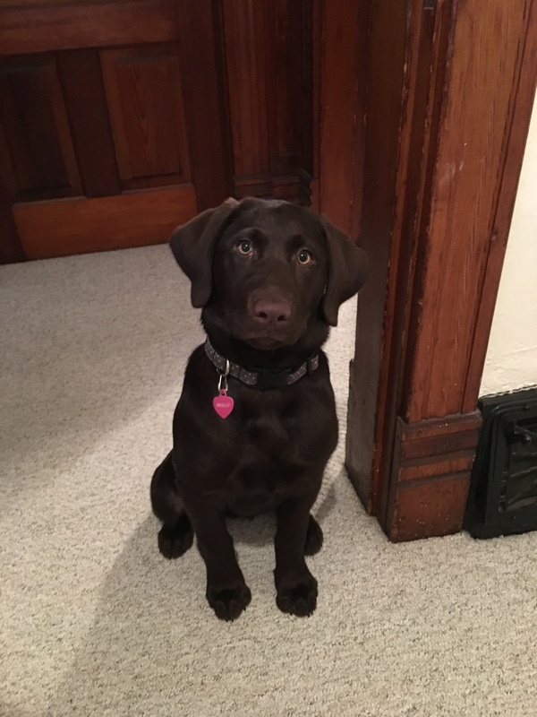 Molly (the chocolate female)