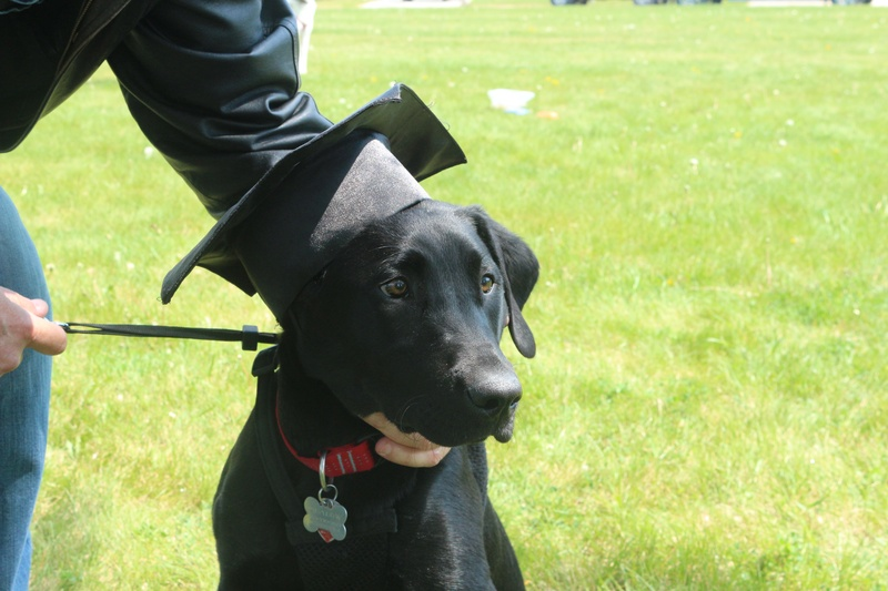 Shadow graduating from puppy class!!
