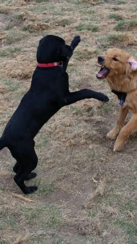 Shadow at the dog park