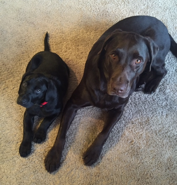 Harley and her brother Jake (one of our puppies from Mocha and Pirate!)