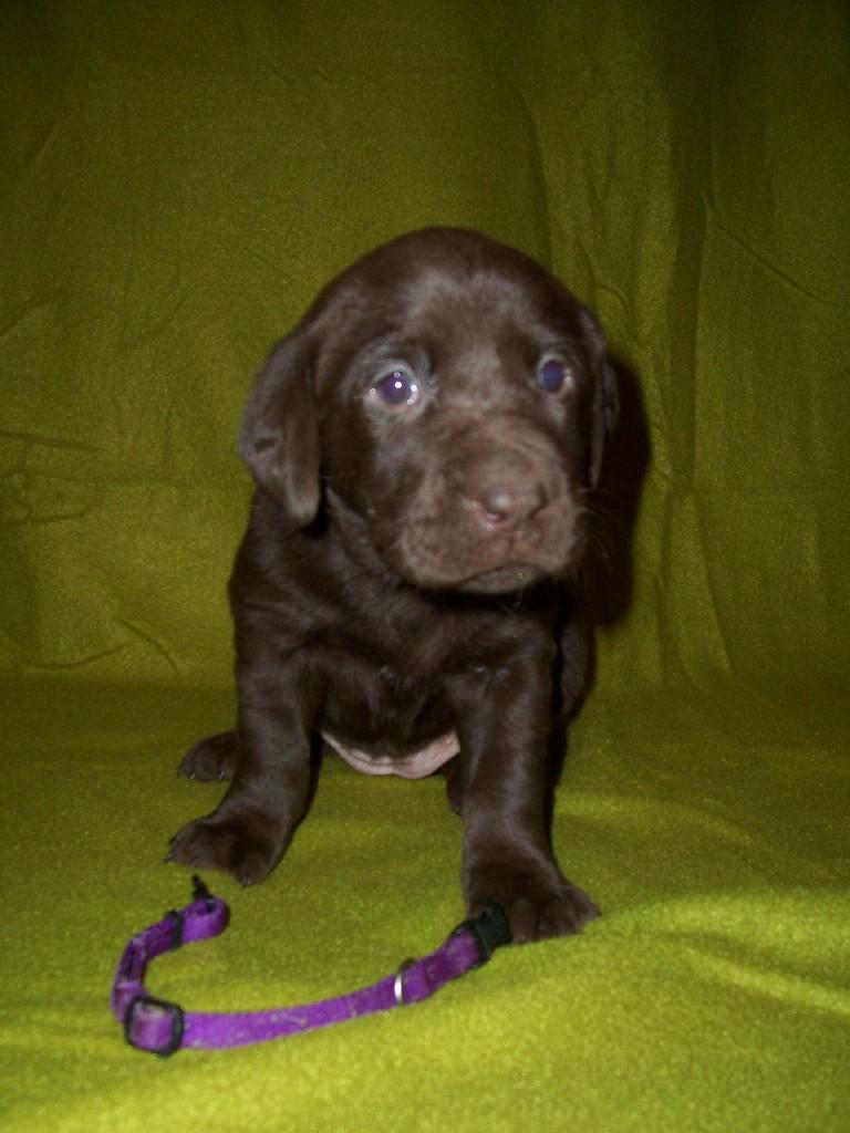 Purple Female - 4 Weeks Old