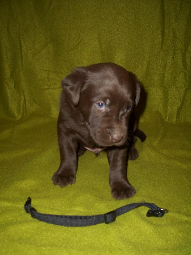 Black Male - 4 Weeks Old