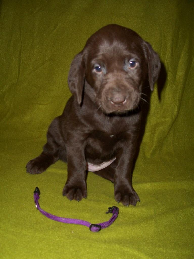 Purple Female - 5 Weeks Old