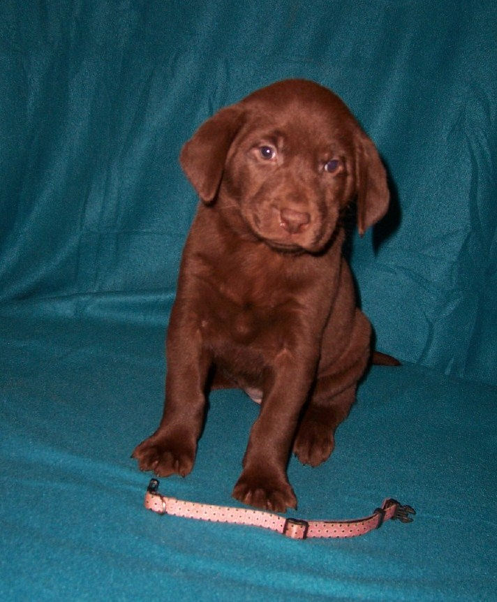 """Pink Dots Female """"Bailey"""" - 6 Weeks Old"""