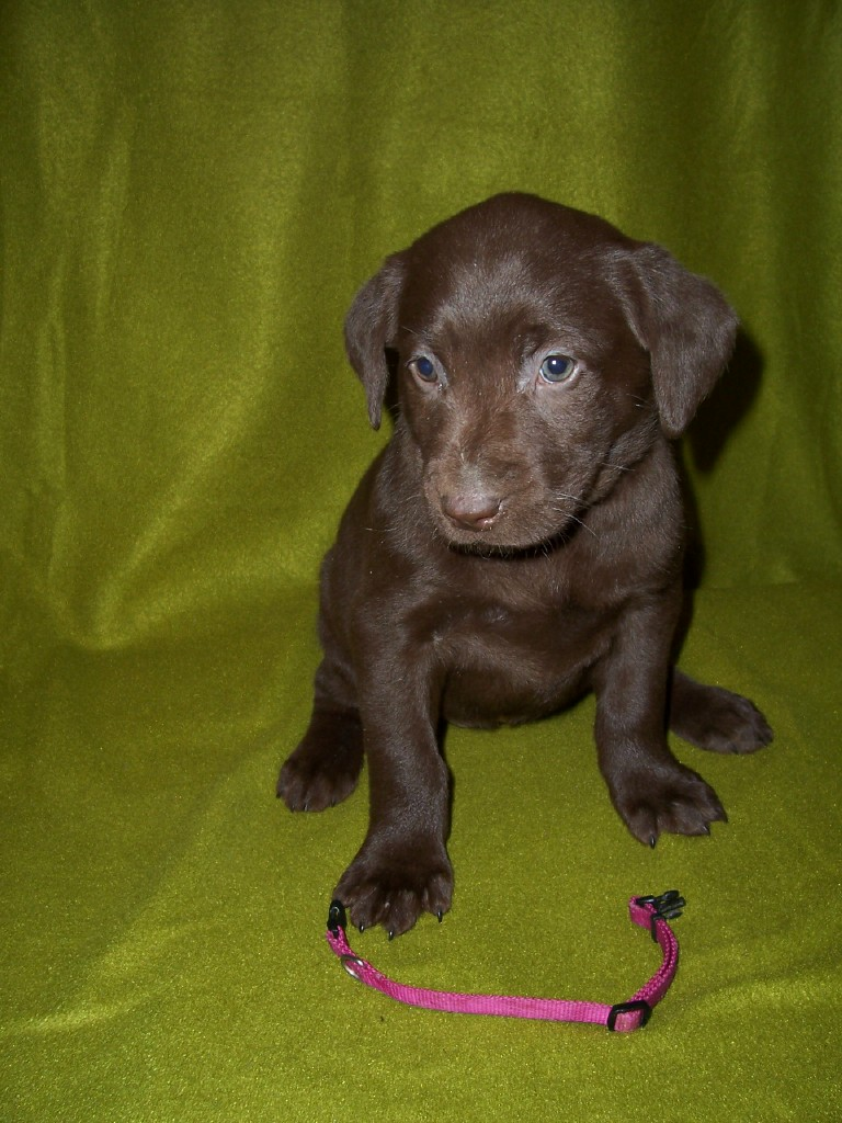 "Pink Female ""Sophie"" - 6 Weeks Old"