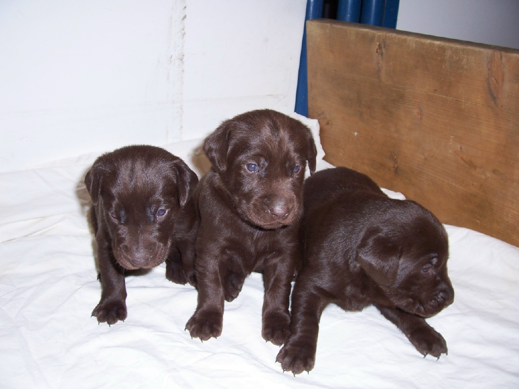 The Males - 3 Weeks Old