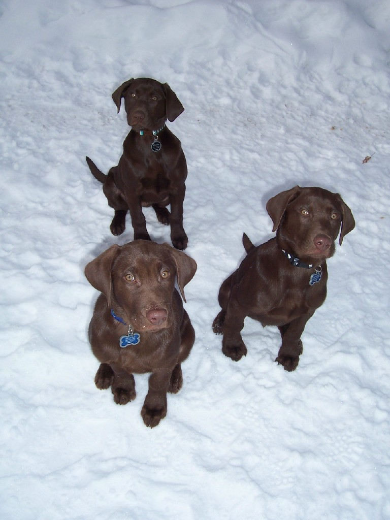 Keeva, Max & Nytro
