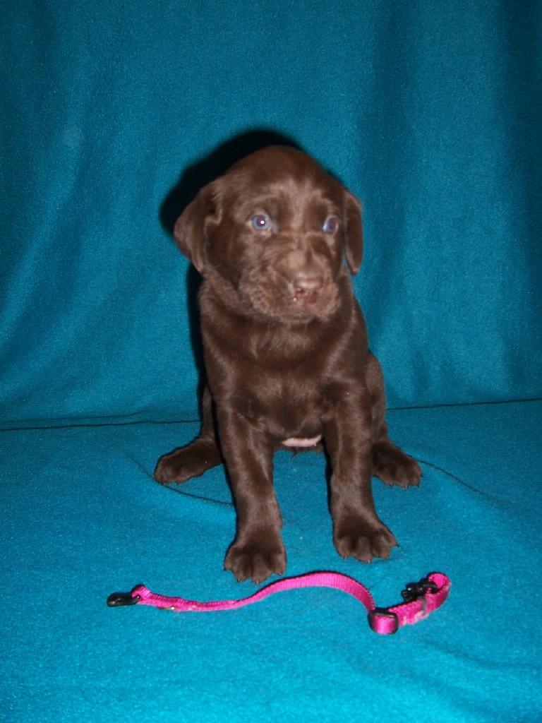 Pink Collar Female - 4 Weeks Old